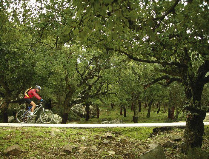 article-parque-natural-de-los-alcornocales-cadiz-511e2a9b504e0 - copia